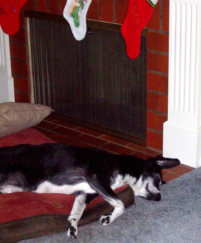 """""""The stockings were hung by the chimney with care and Frankie the fat dog was asleep in his lair .."""" Christmas 2012; an emjayandthem photo"""