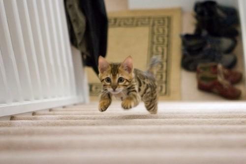 exercising kitty