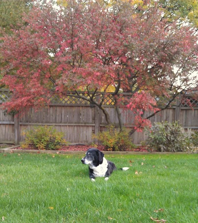 Frankie loved Fall
