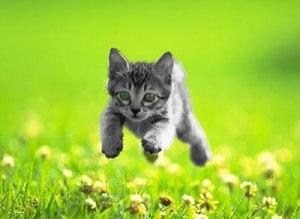 alert kitten