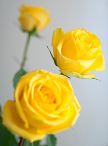 I smile when I see yellow roses.