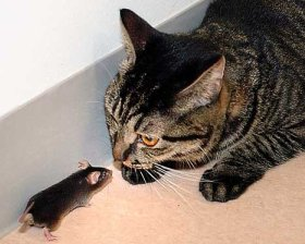 Some days I'm the mouse, other days the cat!