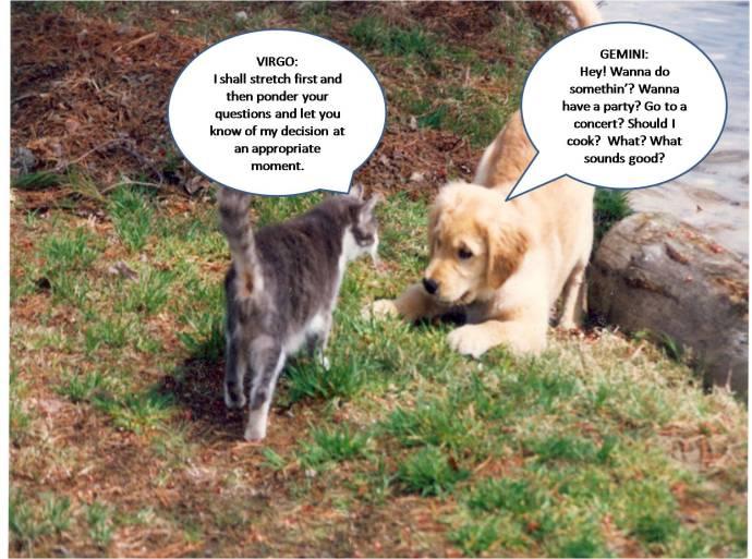 retriever & cat