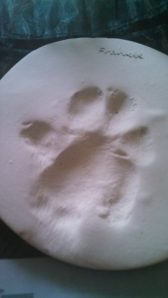an impression of Mr. Bear's paw; an Emjayandthem (C) photo