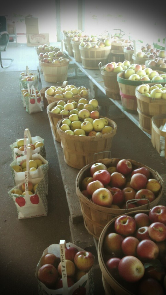 Fall means apples here in Michigan ~ an Emjayandthem (C) photo