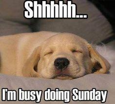 shh_Sunday