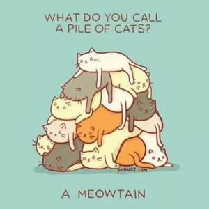 meowtain cats