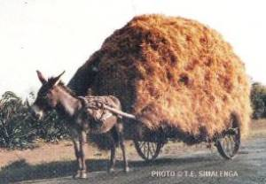 donkey with heavy load