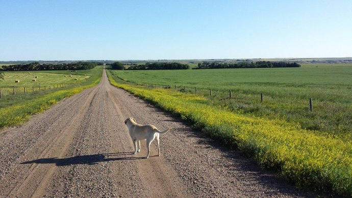 Stevie the dog and the road to home.  An Emjayandthem (C) photo
