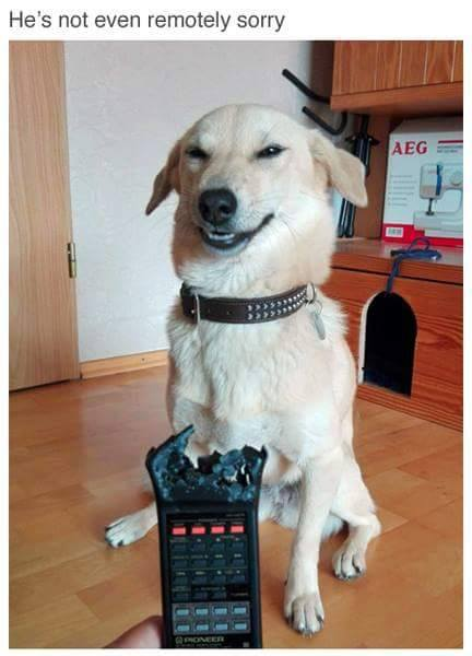 dog-ate-remote