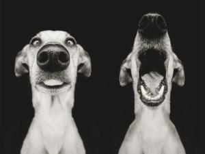tgif-friday-dog-cute-funny