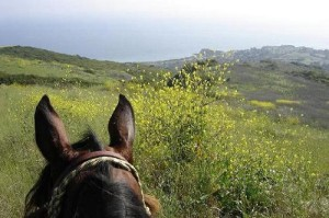 the best view is from the back of a horse!